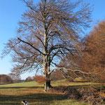 Die Bäume wie Kathedralen - man ist der mal groß!