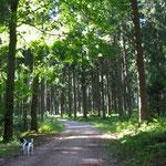 Nee lieber ab in den Wald