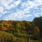 Ausflug in die Weinberge