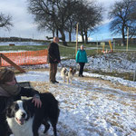 Hoopers Agility Workshop Ende November 2015