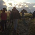Social Walk mit Junghunden