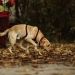 Foto: Karin Kuhn, Rettungshunde NÖ , Auf der Spur