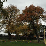 Der Herbst hat Einzug am Hundeplatz gehalten