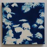 鉢虫鋼 -type02- / 2013 ED.5 S0号(180×180mm) cyanotype 紙 木製パネル