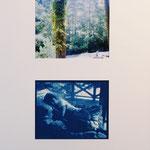 帰る朝 / 2011 cyanotype デジタルプリント