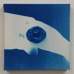 頭足鋼 -type02- / 2013 ED.5 S0号(180×180mm) cyanotype 紙 木製パネル