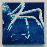 柔甲鋼 -type01- / 2013 ED.5 S0号(180×180mm) cyanotype 紙 木製パネル