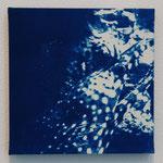 条鰭鋼 -type04- / 2013 ED.5 S0号(180×180mm) cyanotype 紙 木製パネル