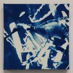 条鰭鋼 -type02- / 2013 ED.5 S0号(180×180mm) cyanotype 紙 木製パネル ★