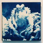 頭足鋼 -type03- / 2013 ED.5 S0号(180×180mm) cyanotype 紙 木製パネル ★