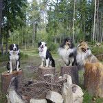 Talis, Finn, Alysha und Jolly