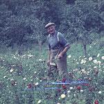 Karl Friedrich Neinaß bei der Arbeit in der Gärtnerei in Waren Amsee