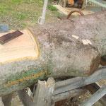 Un viejo tronco de Nogal, ideal para la talla, donde surgirán los libros...