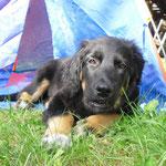 seit dem 26.05.2012 fühlt sich Chiva im Garten in Fulda-Künzell wohl