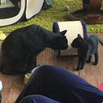 Cosma mit ihrem neuen Kumpel im neuen Zuhause