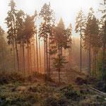 Sonnenaufgang am Brandebusch