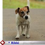 klick auf s Foto Rikki