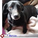 klick auf s Foto Borczo