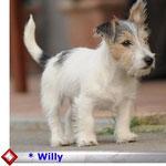 klick auf s Foto Willy
