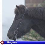 Magnus ( VERKAUFT)