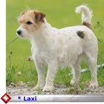 klick auf s Foto Laxi