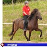 Kvistur  ( VERKAUFT)