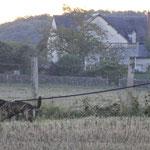 Speuren in de Franse velden (sept. '14)