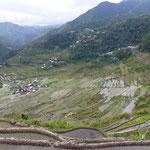 Culture de riz en terrasse