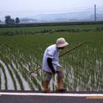 Une agriculture assez peu mécanisée