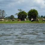 vue du bateau sur le rio San Juan