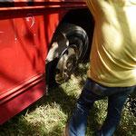 Une crevaison du bus, et....... pas de roue de secours. Pas de panique le bus a des roues jumellées á l'arriére et une roue devrait suffir pour finir le trajet
