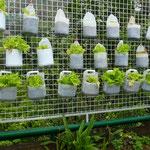 Pas besoin de terrain pour cultiver ses propres salades