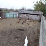 Dans un village pres de Grozny
