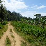 Sentier reliant un village (côte Est)