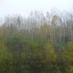 Forêt en montant à Murmansk