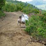 Transport de l herbe fraiche pour l etable