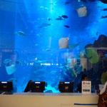 Aquarium géant de Dubaï