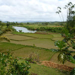 Paysage de rizières (côte Est)