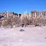 Un touriste au milieu des cactus