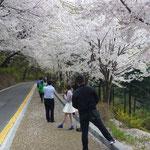 Le bonheur des Coréens : recevoir les pétales de fleurs sur le visage