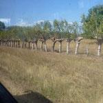 Une solide clôture