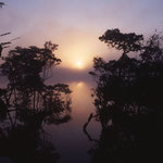 Dans la forêt amazoniene