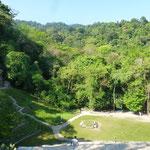 La forêt vierge qui entoure les ruines de Palenque