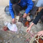 Castration des poulets sur la rue pour en faire des chapons