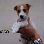 Chacco