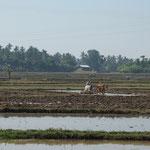 MMR - Nay Pyi Twa nach Bago