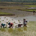MMR - kurz vor Kyaing Tong