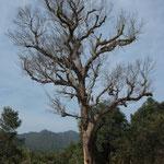 MMR - Kyaing Tong nach Mai Pyin