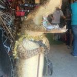THA - auf dem Chatuchak Markt