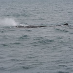 Whale-Watching Kaikoura